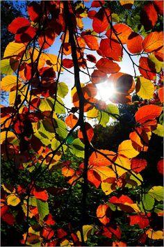 Kunterbunte Herbst Bilder: Poster von Anowi bei Posterlounge.de