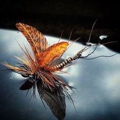 Stunning dry tie by JMVOutdoor #whitingfarms #troutfood #flytying #hackle…
