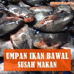 60 Ide Umpan Pancing Umpan Pancing Ikan Pancing