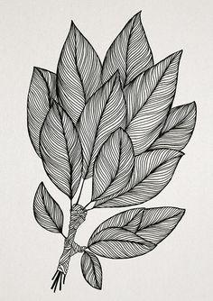 Drawings on Behance Flower Art Drawing, Doodle Art Drawing, Zentangle Drawings, Art Drawings Sketches, Line Drawings, Zantangle Art, Pen Art, Line Art Flowers, Doodle Art Designs