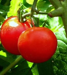 5 modi, completamente gratuiti, per far crescere meglio il vostro orto | Ambiente Bio