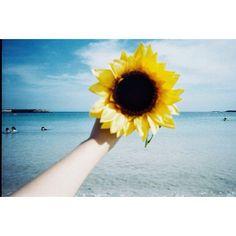 【ig_watashi】さんのInstagramをピンしています。 《「 笑っていたかった 」 . #film #coregraphy #instagood #instadaily #igersjp #igers #japan #sunflower #sea #blue #フィルム #フィルムに恋してる #向日葵 #海 #青》