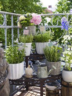 Gemüse und Kräuter auf dem Balkon