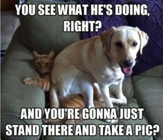 These cute animals having funny reactions that making us a lot of LOL (laugh out loud). Check our 25 best animal memes images on Disqora that make your day. Funny Dog Memes, Funny Animal Memes, Funny Animal Pictures, Cute Funny Animals, Cat Memes, Funny Cute, Funny Dogs, Funniest Animals, Dog Humor