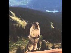 Screaming Marmot Remix  https://www.youtube.com/watch?v=G9m8O-7J5NM