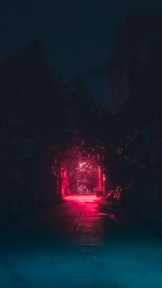 See the best 316 free high-resolution photos of Flowers and Plants Night Aesthetic, Neon Aesthetic, Light Background Images, Lights Background, Lit Wallpaper, Screen Wallpaper, Wallpaper Canada, Cyberpunk, Neon Noir