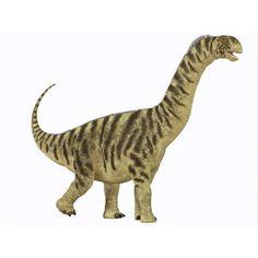 A juvenile Camarasaurus sauropod dinosaur that lived during the Jurassic Age Canvas Art - Corey FordStocktrek Images (17 x 13)