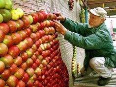 Helge Lundstrom is an apple artist! He makes a different apple mosaic every year for the Apple Market Festival in Kivik, Sweden.