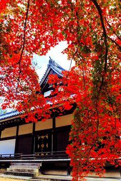 Ninna-ji Temple,Kyoto