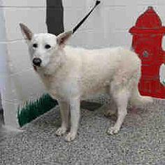 NACHO located in Los Angeles, CA in 2020 Dog status, Pet