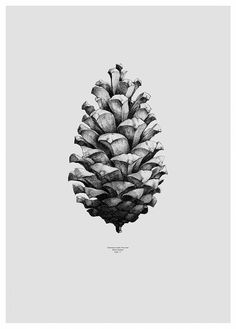 Form us with love, Pine cone Grey by Paper Collective | Poster from theposterclub.com
