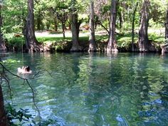 the Blue Hole - Wimberley, Texas
