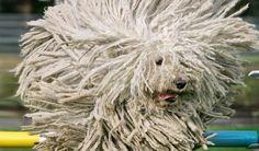 Jahoor, het is weer maandag. Om het wat dragelijker te maken een foto van deze hond. Dit moet toch wel een glimlach op je gezicht toveren!