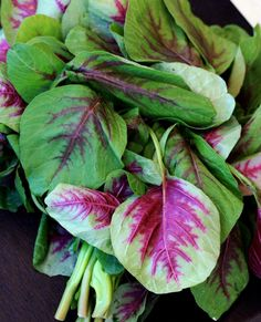 Organic Heirloom 3600 Seeds Amaranth Chinese Spinach Red Edible Vegetable Garden Seeds F33, $1.79