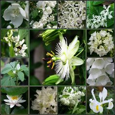 witte bloemen in de tuin / white flowers in the garden | Flickr