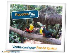 Você ainda não visitou o Parque das Aves em Foz do Iguaçu?  Acesse nosso site, encontre os pacotes de viagem que ultrapassam os 60% de desconto, e venha conhece as belezas da fronteira!  cadastre-se! www.pacotesfoz.com.br  #ConheçaFozdoIguaçu