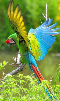 red parrot wallpaper high quality dang parrot wallpaper bird rh pinterest com