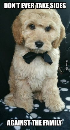 Puppy version of the godfather
