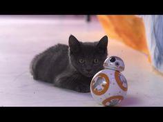 New Star Wars Toy Proves Kittens Work for the Dark Side Jar Jar Binks, Star Wars Droids, Love Stars, Darth Maul, Chewbacca, Boba Fett, Dark Side, Cute Cats, Cute Animals