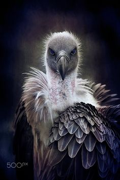 Who You Looking At - Vulture