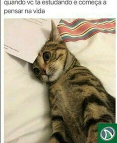 Funny Memes - View our collection of the web's funniest memes - submitted by users. Our list has the All-Time Greats and the funniest memes generated just today. Memes Humor, Cat Memes, Funny Memes, Funny Captions, I Love Cats, Crazy Cats, Cute Cats, Animal Memes, Funny Animals