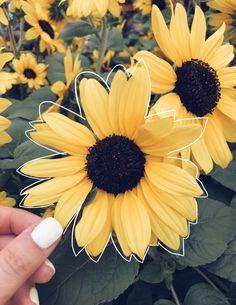 sunflower♡