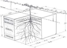 Root System Depth - Wine Making & Grape Growing Forum