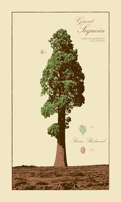 Giant Sequoia, also from Powerslide Design. (Full disclosure: I actually own this print. And yes, I think it's beautiful enough to be our mascot.)
