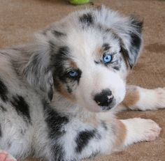 i need this dog... now someone tell me what this baby is