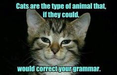 What type of animal is a cat?