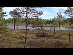 Kansallispuisto Seitseminen & Helvetinjärvi ( HD 1080 p ) - YouTube