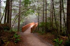 A foot bridge along the trail to the Lady Bird Johnson Grove in Redwood NP, California
