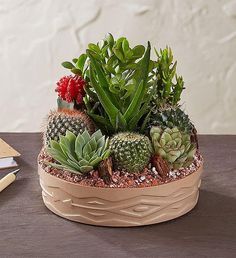 EXCLUSIVE Bring a touch of Southwestern charm to any home décor with our easy-to-care-for cactus dish garden. Succulent Arrangements, Cacti And Succulents, Planting Succulents, All Flowers, Types Of Flowers, Sympathy Plants, How To Grow Cactus, Food Gift Baskets, Dish Garden