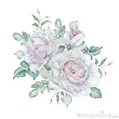 Hand drawn watercolor floral bouquet isolated on white background. White roses. Great for creating vintage designs