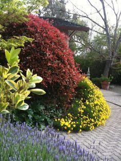 Peter Skinner's spring garden.