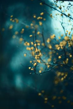 "blooms-and-shrooms: "" Stars Align by Robert Elia "" Scenery Photography, Still Life Photography, Flower Photography, Cool Pictures, Beautiful Pictures, Collage Pictures, Stay Wild Moon Child, Shades Of Teal, Happy Paintings"