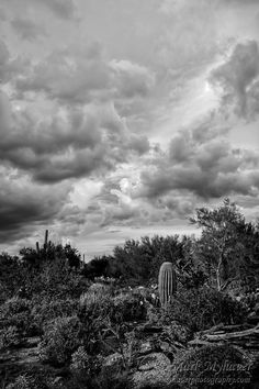 Desert In Clouds v15 Desert In Clouds v15 photography by Mark Myhaver is a summer evening view of the Sonoran Desert of Arizona with a cloud cover suggesting a pending...