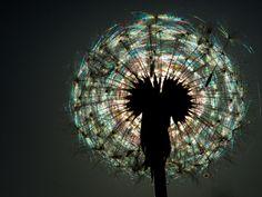 Magic lamp by Valeriy Evdokimov on 500px