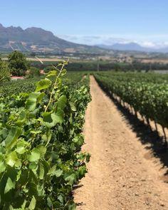 #winefarm #stellenbosch