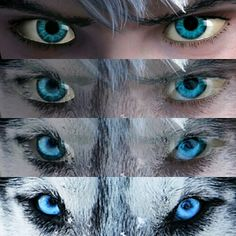 Jack frost/wolf I LOVE THIS!!