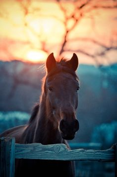 I see wildflowers on distant hills... #horse #sunset #corral