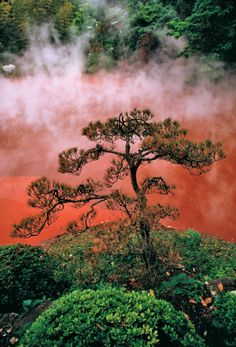 Steam rises from hot springs at Blood Pond Hell on Kyushu Island, Japan. Brave tree!