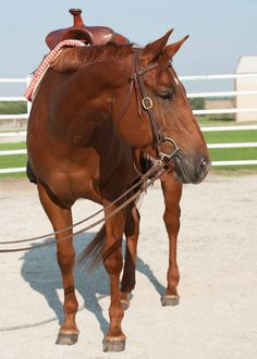 Assets Pretty Woman (Wendy) For more info visit our website! #MUEquine