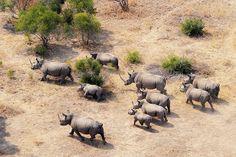 Rhinos, Kruger National Park, South Africa