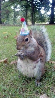 Squirrel wearing a hat. | Meet Penn State's Squirrel Whisperer - Onward State