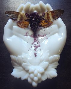 """Alchemical treasure recently received: another exquisite crystallized cicada from for my little wunderkammer, this time an """"Amethyst"""" Orange specimen. Holding one of these marvelous. Hand Bone, Near Dark, Moth Wings, Beautiful Dream, Thrasher, Goblin, Faeries, Art Lessons, Cool Photos"""