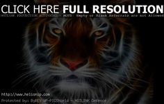 FREE TIGER WALLPAPER PICTURES