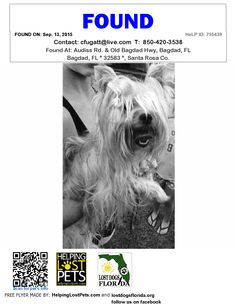 Found Dog - Yorkie Poo - Bagdad, FL, United States