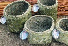 Flax Weaving, Basket Weaving, Hand Weaving, New Zealand Flax, Diy And Crafts, Arts And Crafts, Flax Fiber, Maori Designs, Swedish Weaving