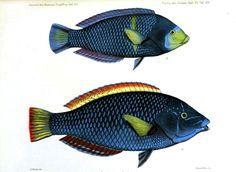 Animal - Fish - Navy blue